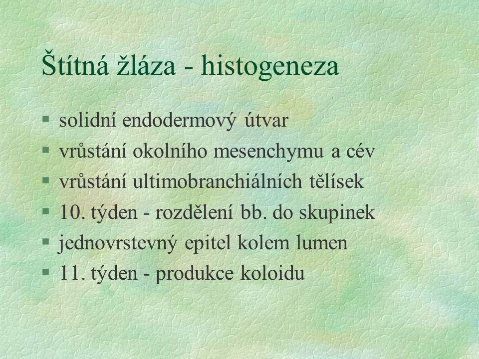 Štítná žláza - histogeneza