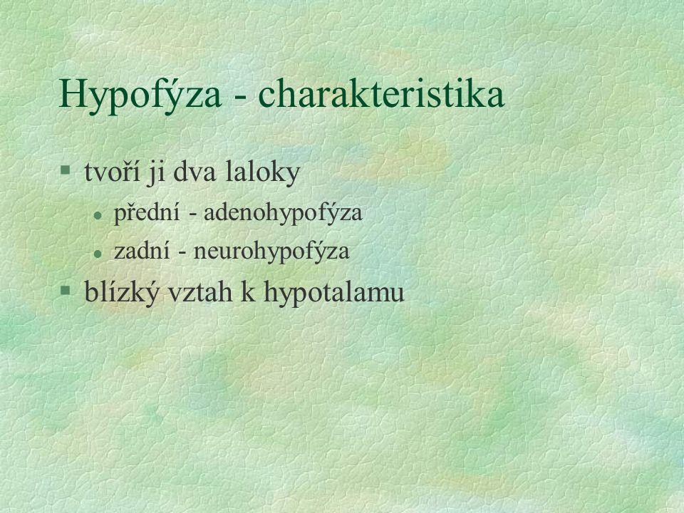 Hypofýza - charakteristika