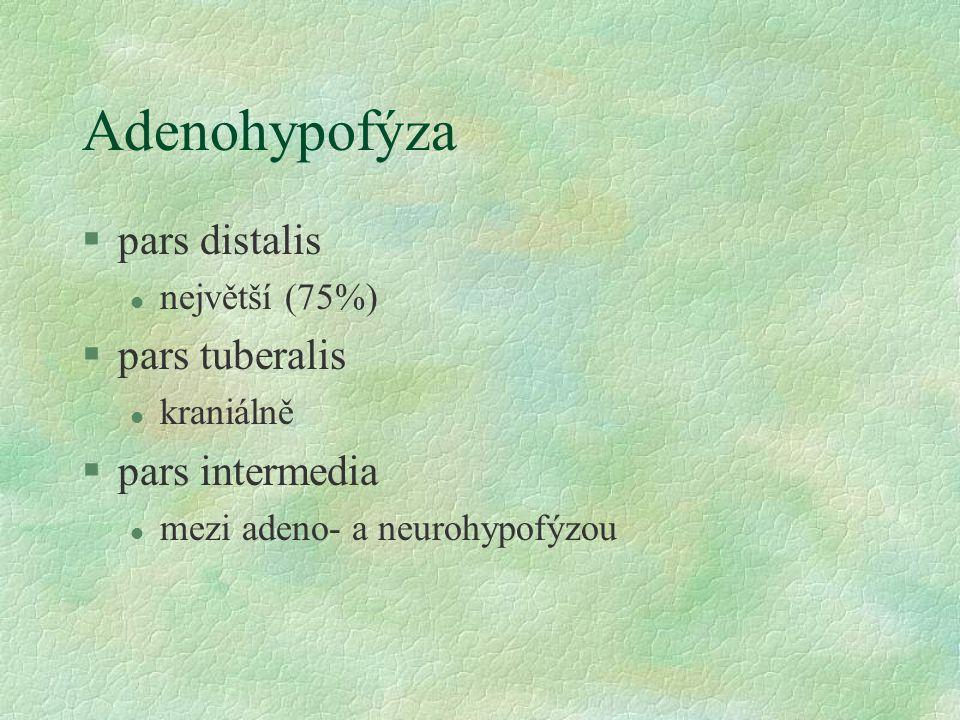 Adenohypofýza pars distalis pars tuberalis pars intermedia