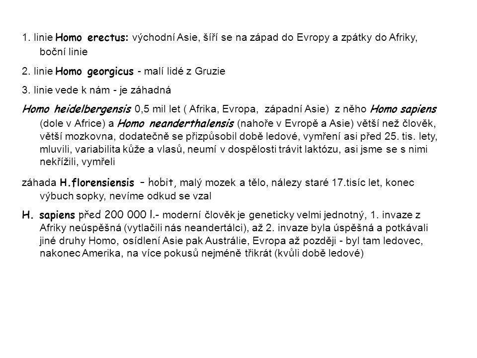 1. linie Homo erectus: východní Asie, šíří se na západ do Evropy a zpátky do Afriky, boční linie