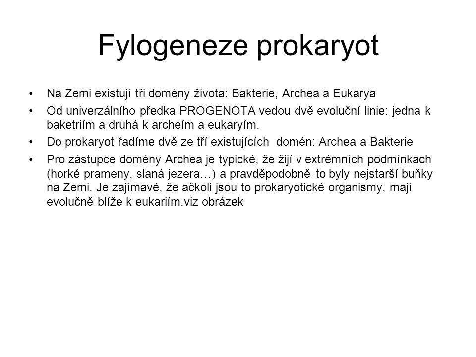 Fylogeneze prokaryot Na Zemi existují tři domény života: Bakterie, Archea a Eukarya.