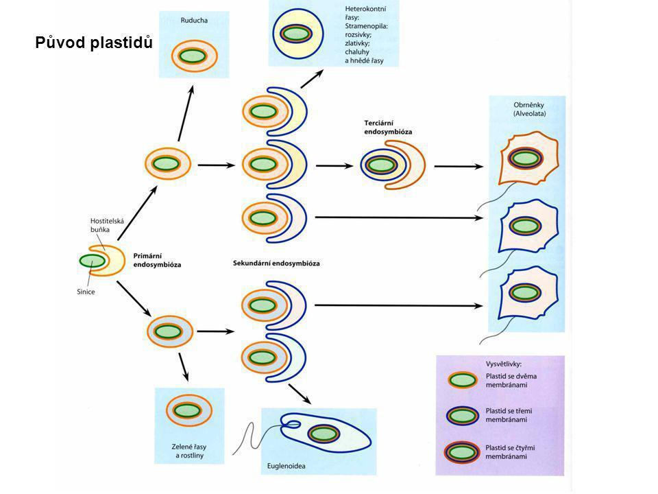 Původ plastidů