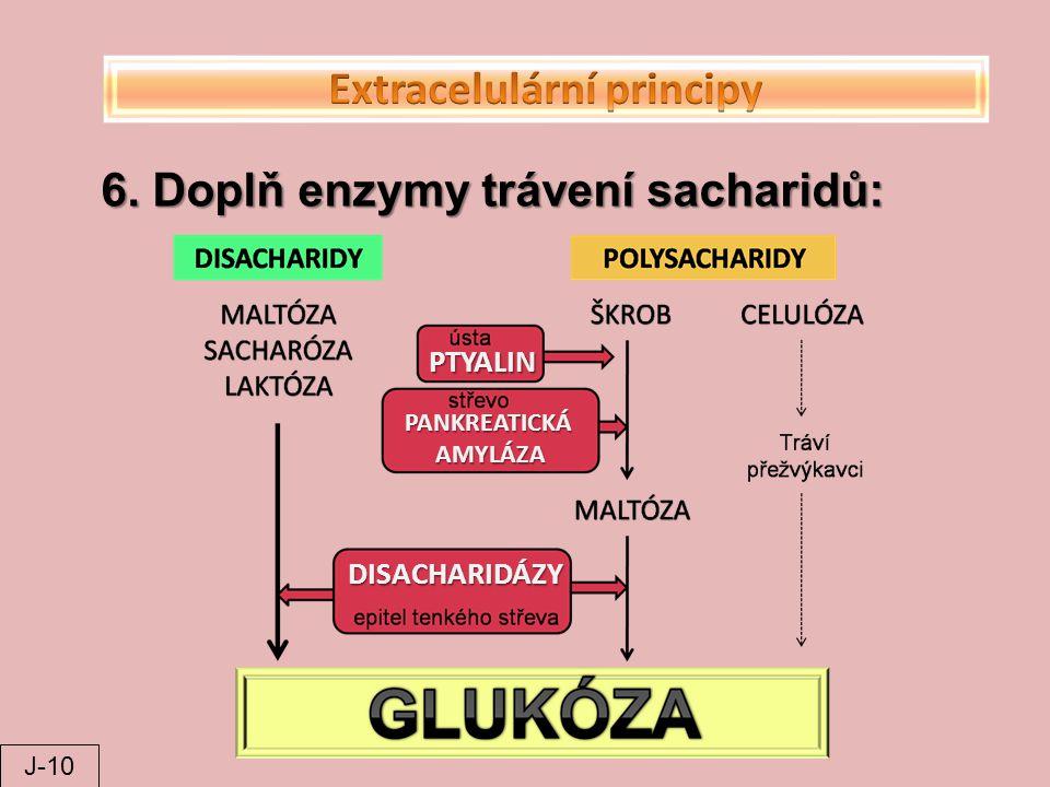 Extracelulární principy