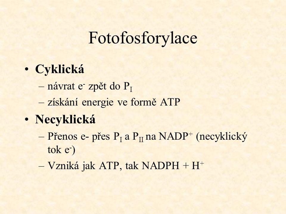 Fotofosforylace Cyklická Necyklická návrat e- zpět do PI