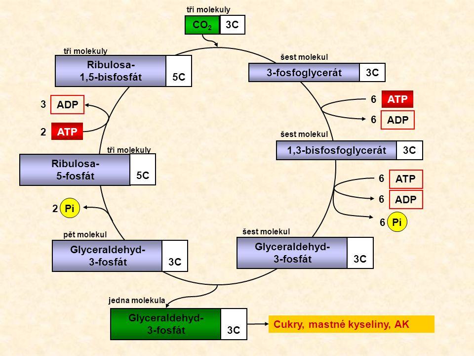 Glyceraldehyd- 3-fosfát 3C Glyceraldehyd- 3-fosfát 3C
