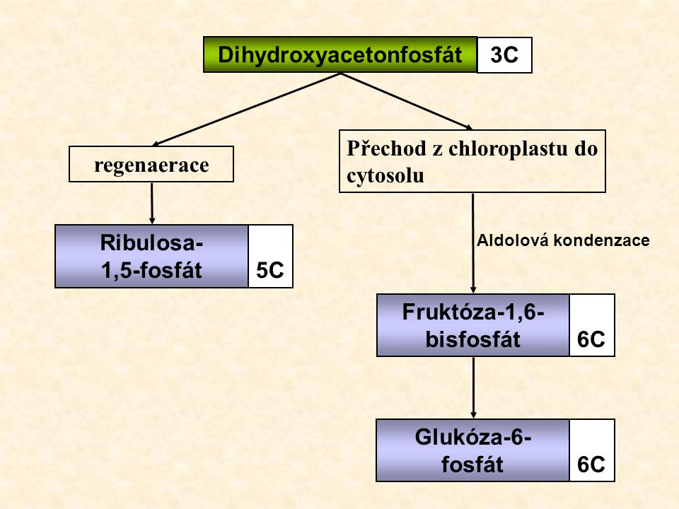 Dihydroxyacetonfosfát