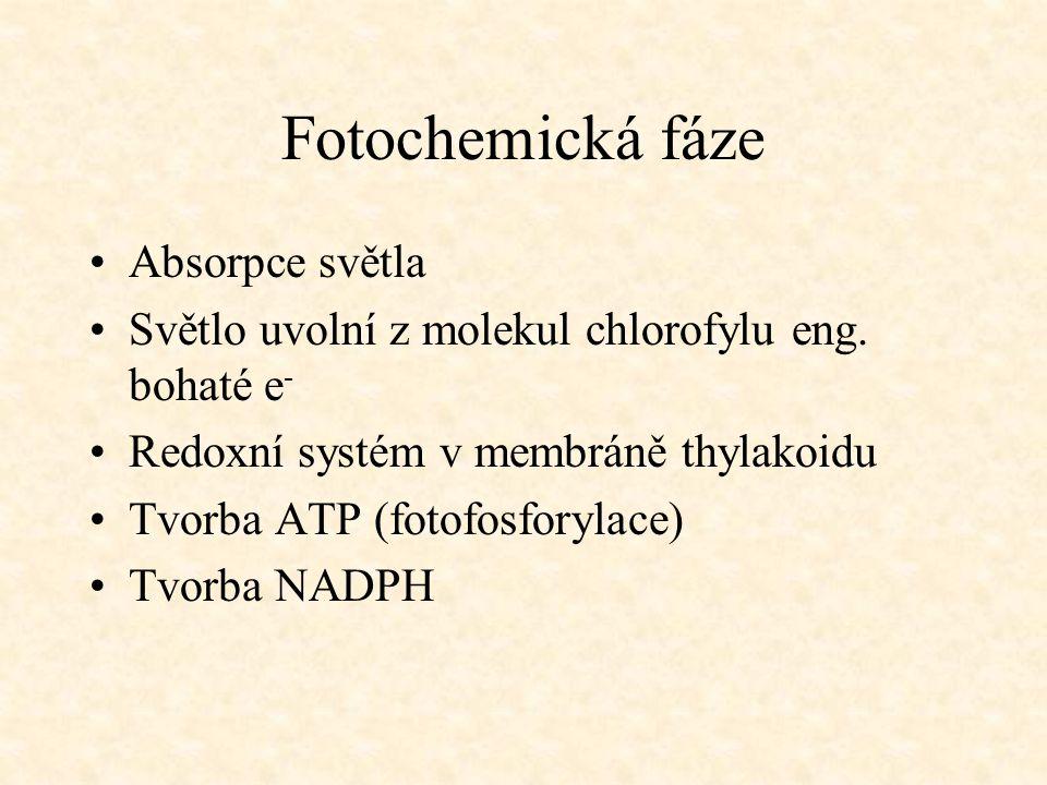 Fotochemická fáze Absorpce světla
