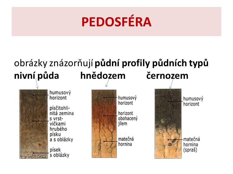 PEDOSFÉRA obrázky znázorňují půdní profily půdních typů nivní půda hnědozem černozem.