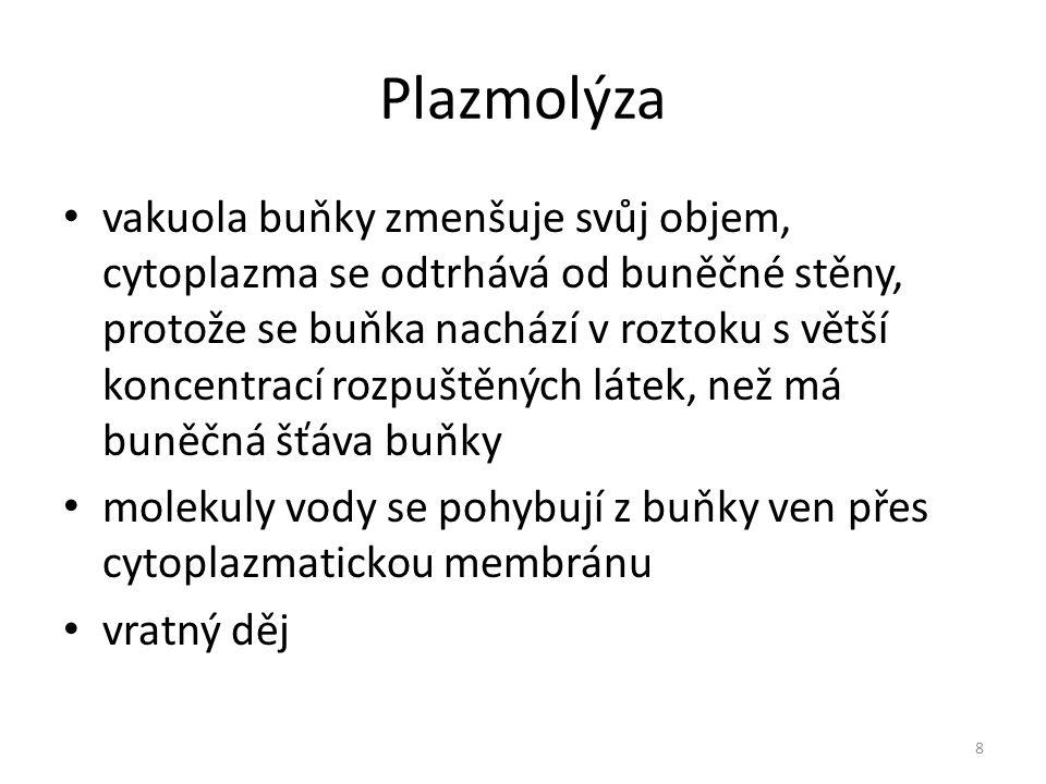 Plazmolýza
