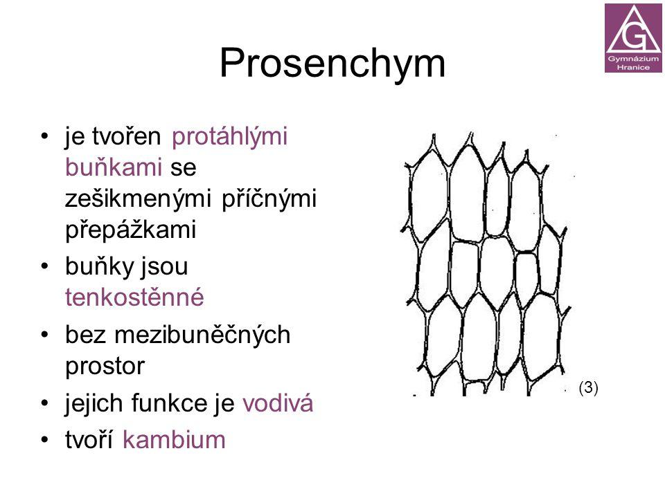 Prosenchym je tvořen protáhlými buňkami se zešikmenými příčnými přepážkami. buňky jsou tenkostěnné.