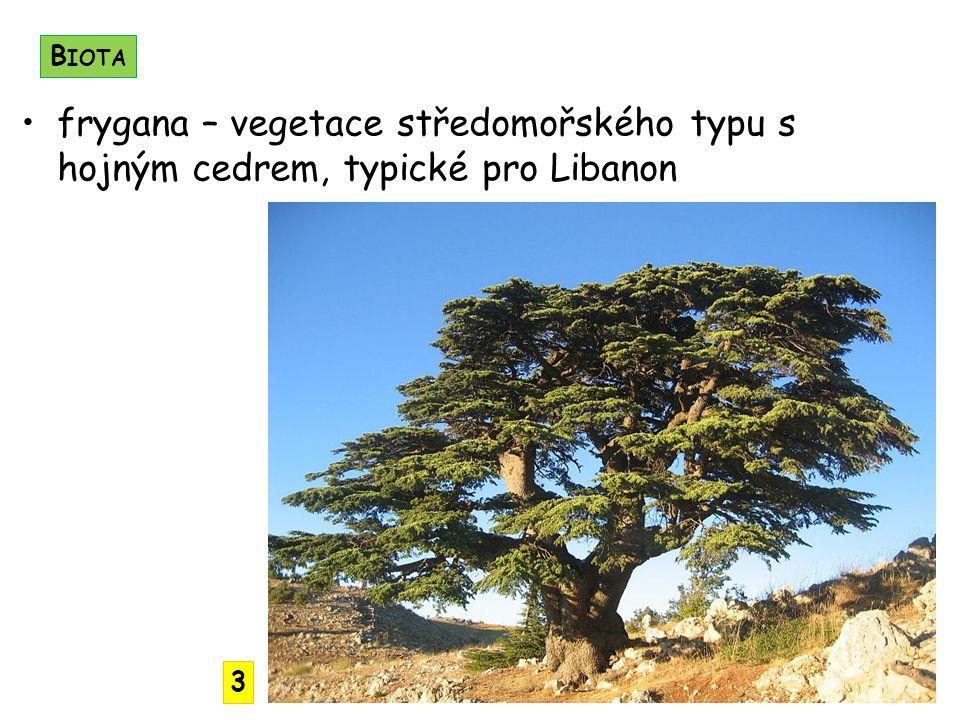 Biota frygana – vegetace středomořského typu s hojným cedrem, typické pro Libanon 3