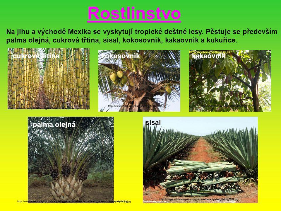 Rostlinstvo Na jihu a východě Mexika se vyskytují tropické deštné lesy. Pěstuje se především.