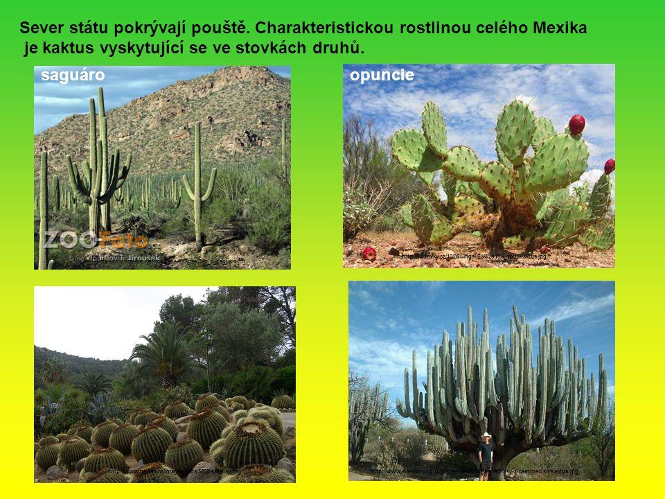 je kaktus vyskytující se ve stovkách druhů.