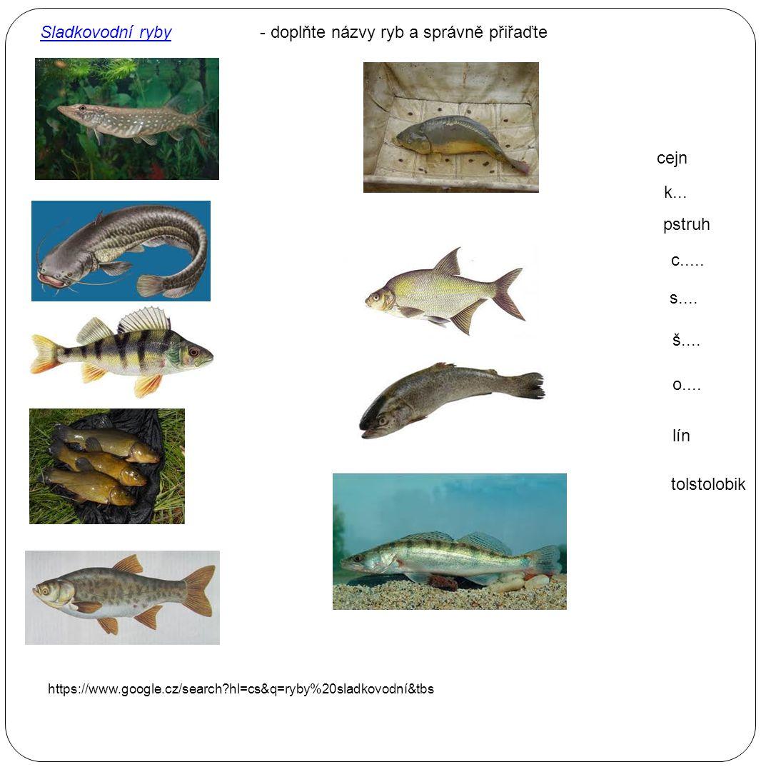 - doplňte názvy ryb a správně přiřaďte