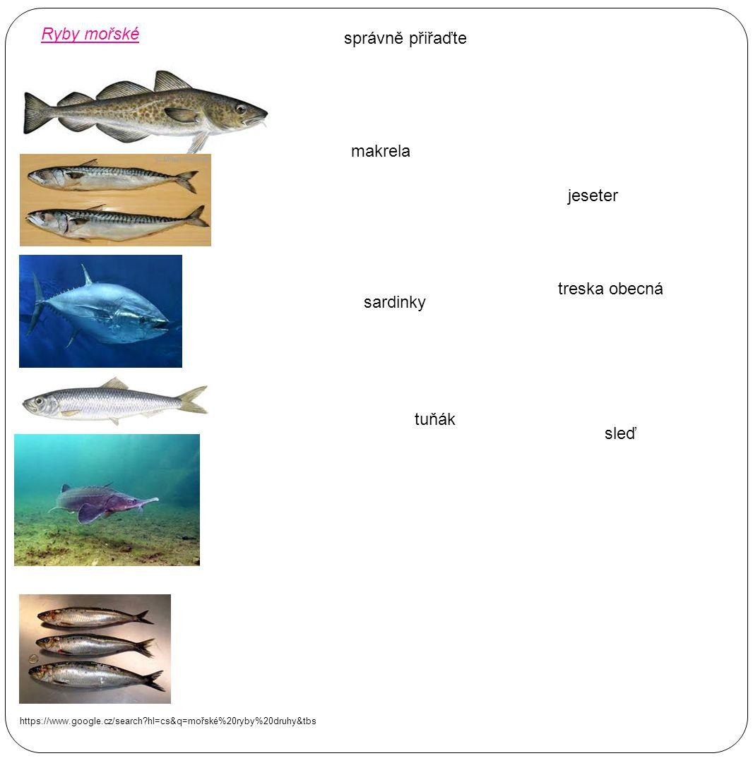 Ryby mořské správně přiřaďte makrela jeseter treska obecná sardinky