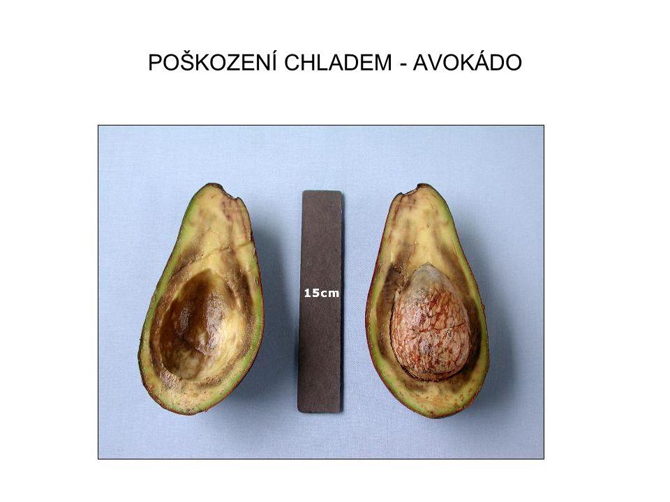POŠKOZENÍ CHLADEM - AVOKÁDO