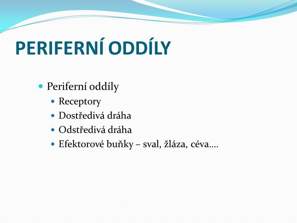 PERIFERNÍ ODDÍLY Periferní oddíly Receptory Dostředivá dráha