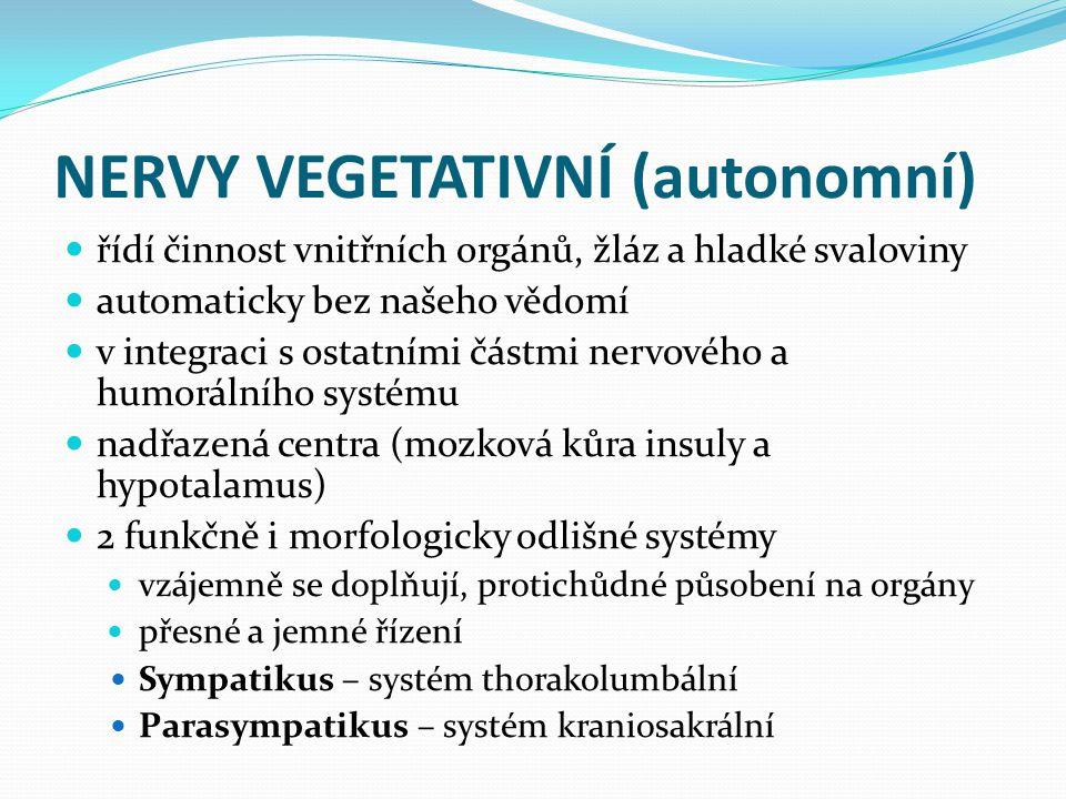 NERVY VEGETATIVNÍ (autonomní)