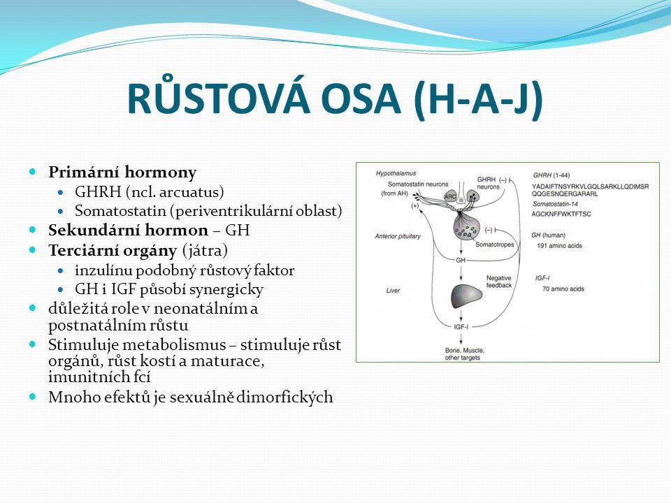 RŮSTOVÁ OSA (H-A-J) Primární hormony Sekundární hormon – GH