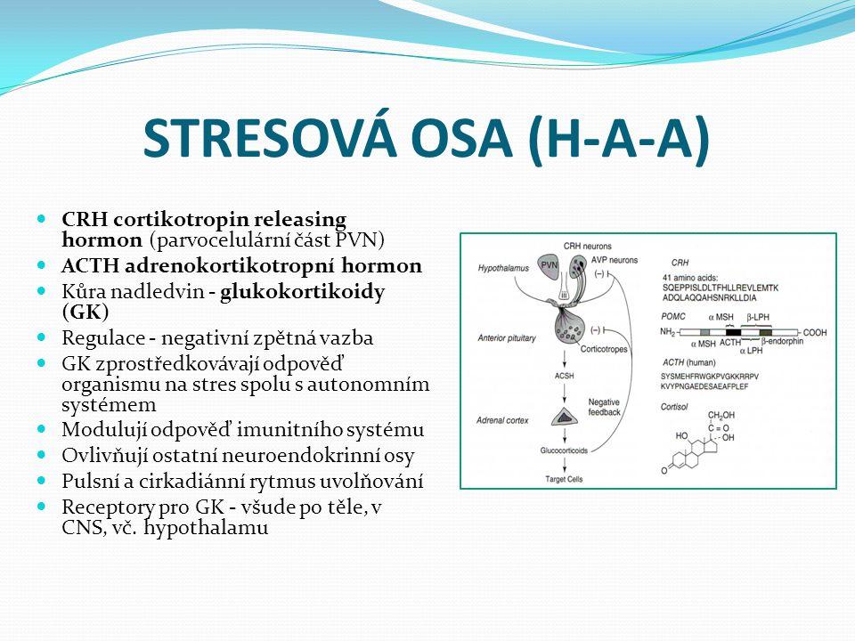 STRESOVÁ OSA (H-A-A) CRH cortikotropin releasing hormon (parvocelulární část PVN) ACTH adrenokortikotropní hormon.
