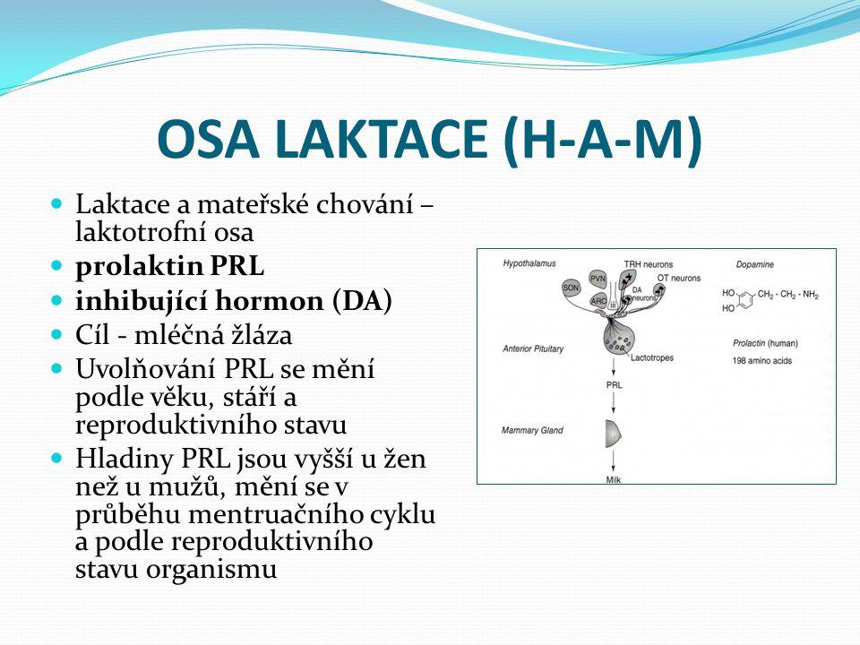OSA LAKTACE (H-A-M) Laktace a mateřské chování – laktotrofní osa
