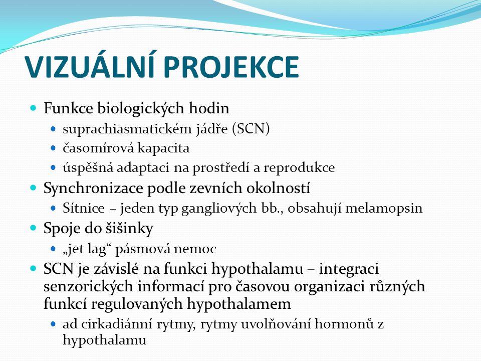 VIZUÁLNÍ PROJEKCE Funkce biologických hodin