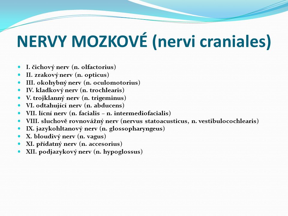 NERVY MOZKOVÉ (nervi craniales)