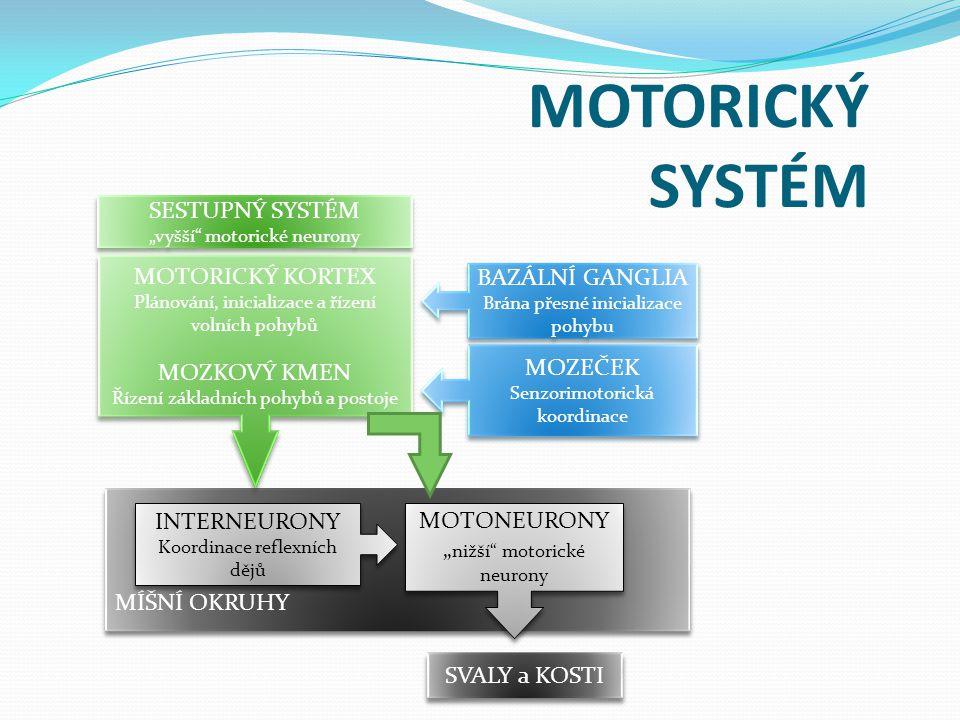 MOTORICKÝ SYSTÉM SESTUPNÝ SYSTÉM MOTORICKÝ KORTEX MOZKOVÝ KMEN