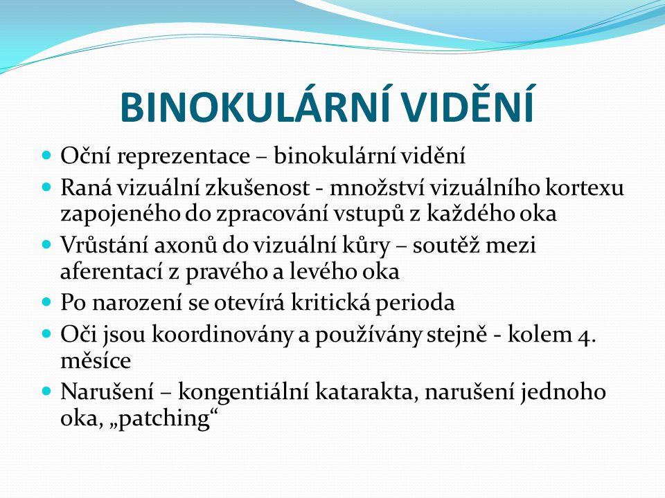 BINOKULÁRNÍ VIDĚNÍ Oční reprezentace – binokulární vidění