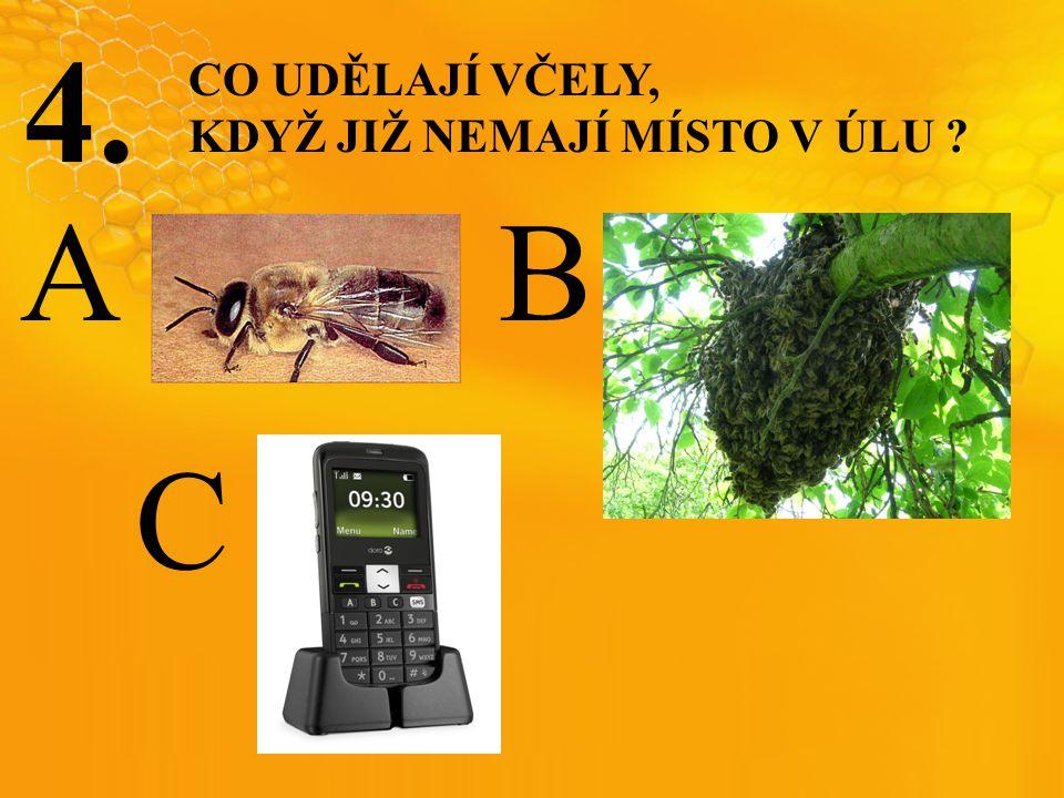 4. CO UDĚLAJÍ VČELY, KDYŽ JIŽ NEMAJÍ MÍSTO V ÚLU A B C
