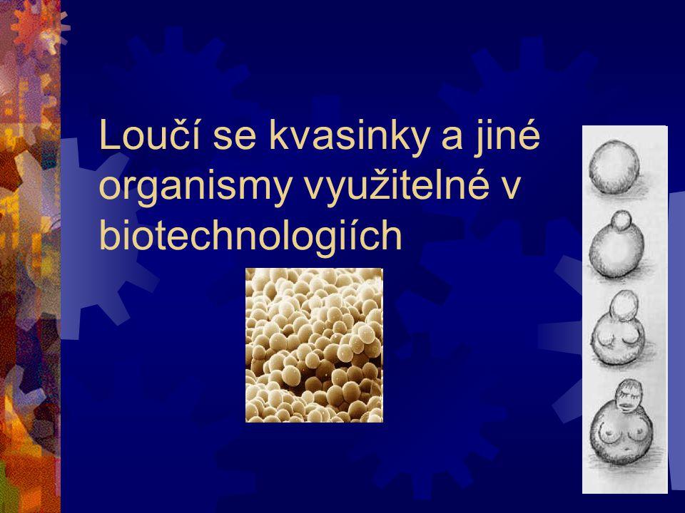 Loučí se kvasinky a jiné organismy využitelné v biotechnologiích
