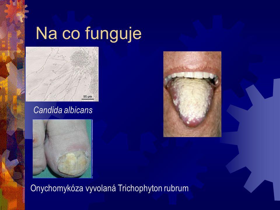 Na co funguje Candida albicans