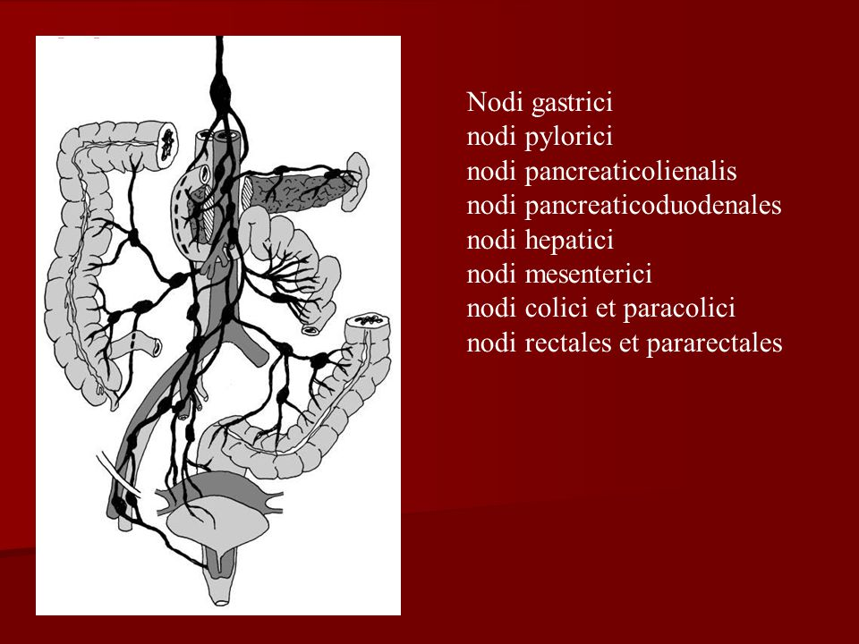 Nodi gastrici nodi pylorici nodi pancreaticolienalis nodi pancreaticoduodenales nodi hepatici nodi mesenterici nodi colici et paracolici nodi rectales et pararectales