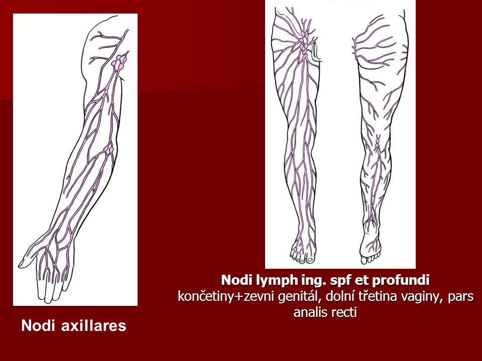 Nodi lymph ing. spf et profundi končetiny+zevni genitál, dolní třetina vaginy, pars analis recti