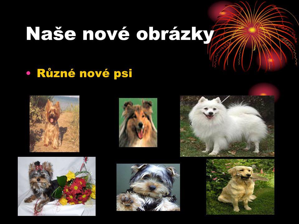 Naše nové obrázky Různé nové psi