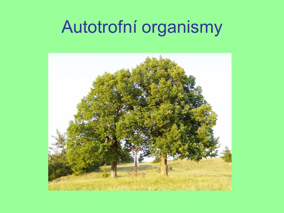 Autotrofní organismy