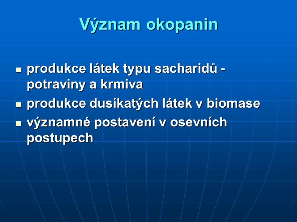 Význam okopanin produkce látek typu sacharidů - potraviny a krmiva