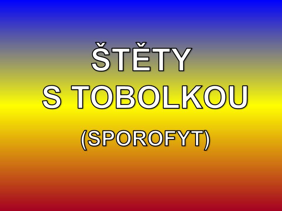 ŠTĚTY S TOBOLKOU (SPOROFYT)