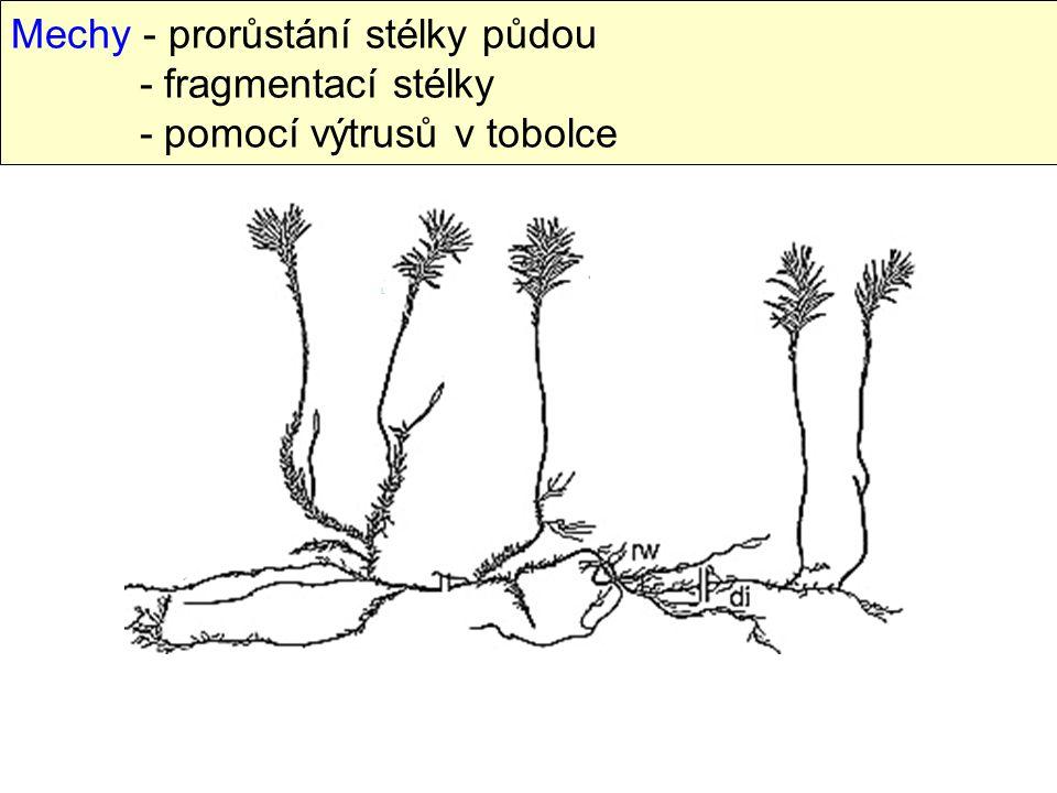 Mechy - prorůstání stélky půdou. - fragmentací stélky