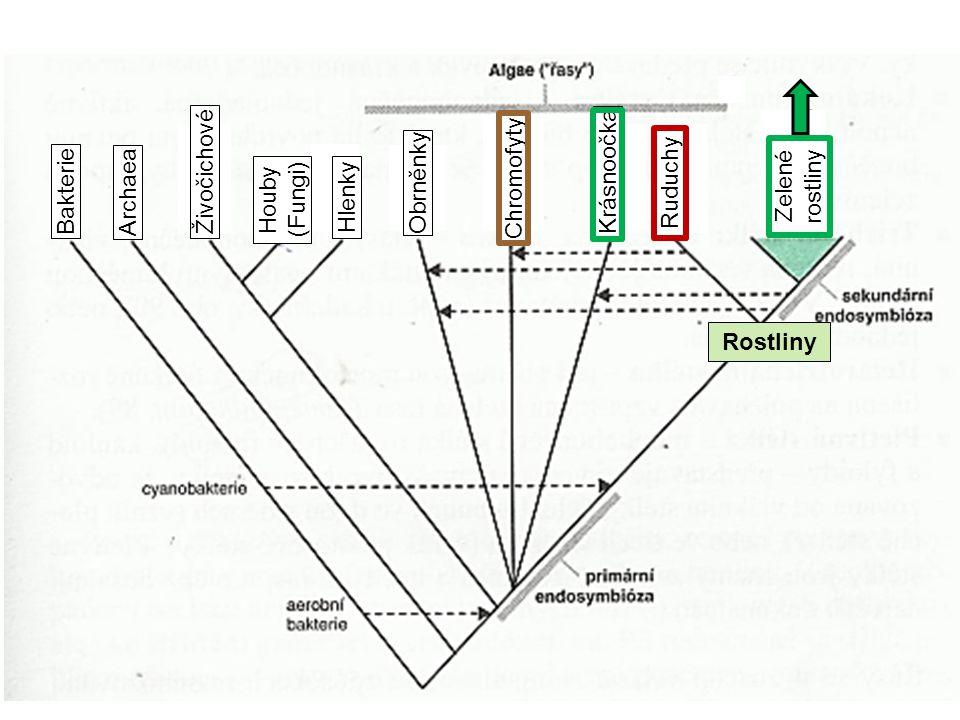 Rostliny Bakterie. Archaea. Živočichové. Hlenky. Obrněnky. Chromofyty. Krásnoočka. Ruduchy. Zelené rostliny.