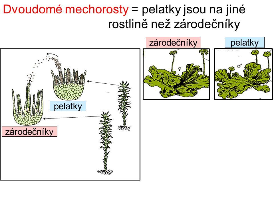 Dvoudomé mechorosty = pelatky jsou na jiné rostlině než zárodečníky