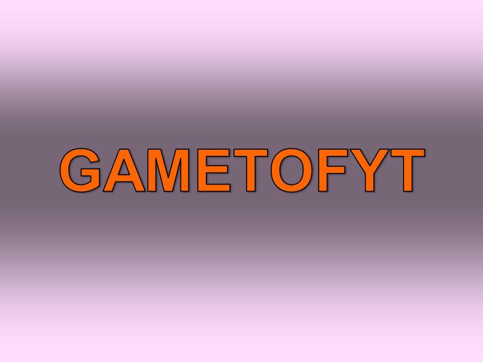 GAMETOFYT