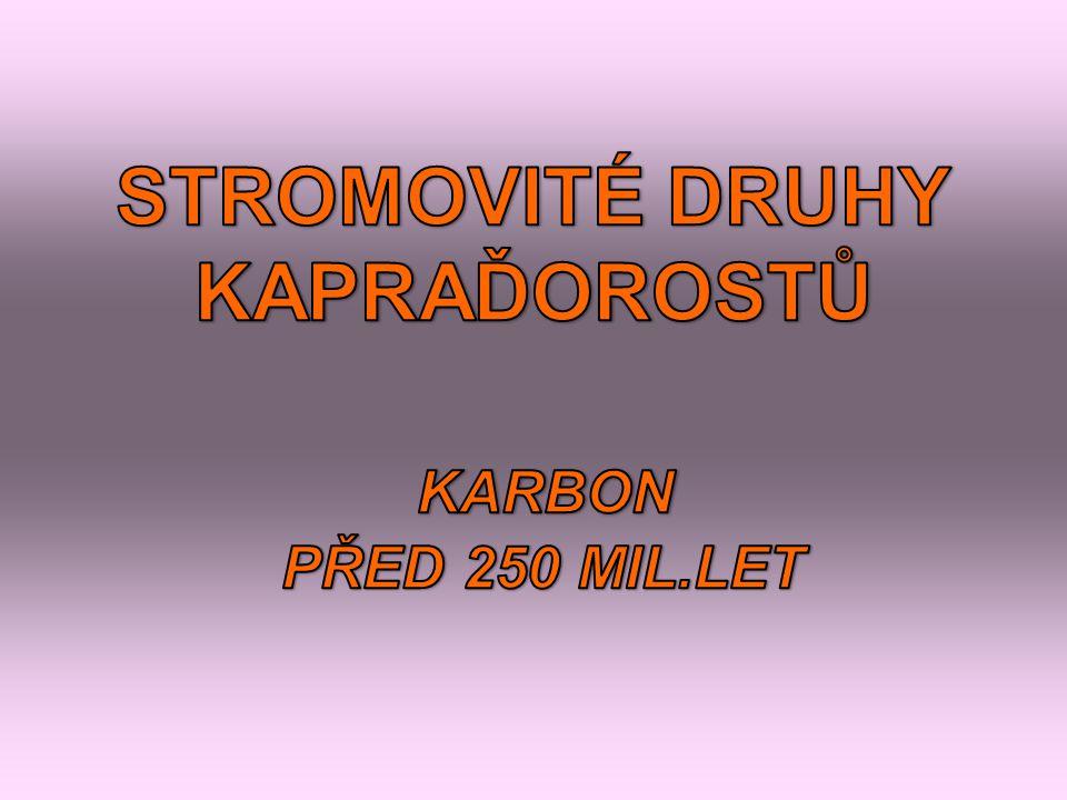STROMOVITÉ DRUHY KAPRAĎOROSTŮ KARBON PŘED 250 MIL.LET