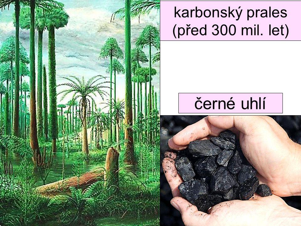 karbonský prales (před 300 mil. let)