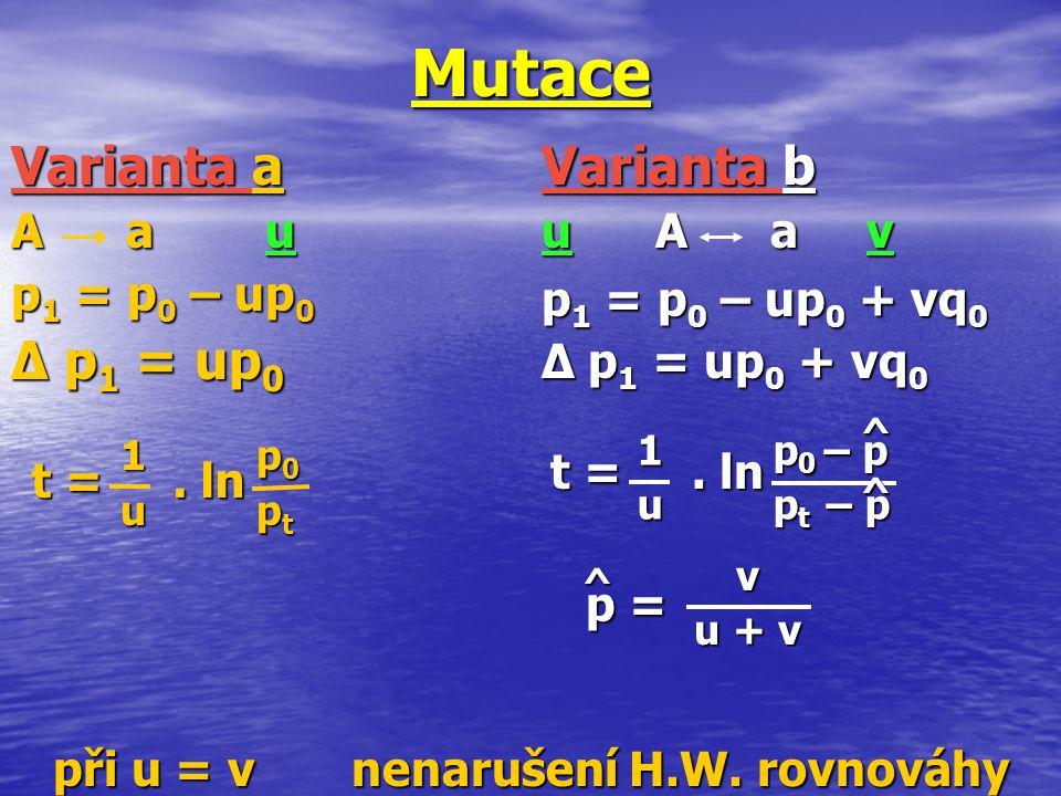 při u = v nenarušení H.W. rovnováhy