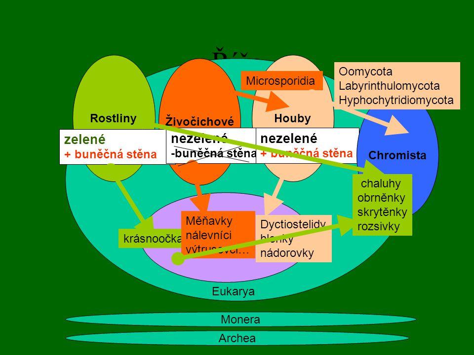 Říše zelené nezelené nezelené Rostliny Houby Živočichové Oomycota
