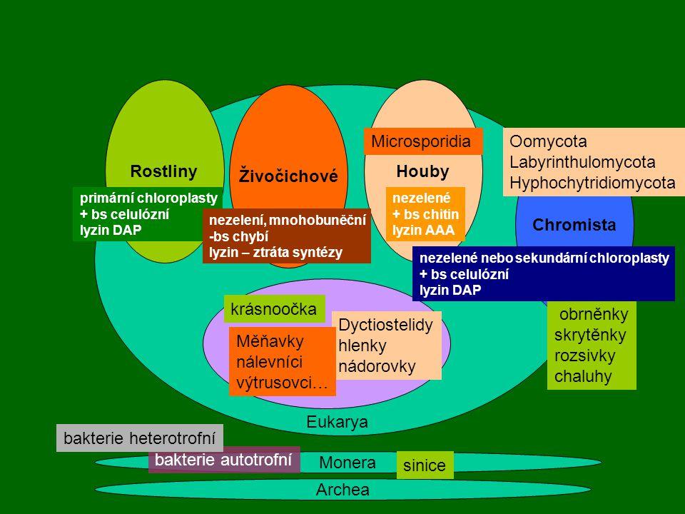 Rostliny Houby Živočichové Chromista Protista