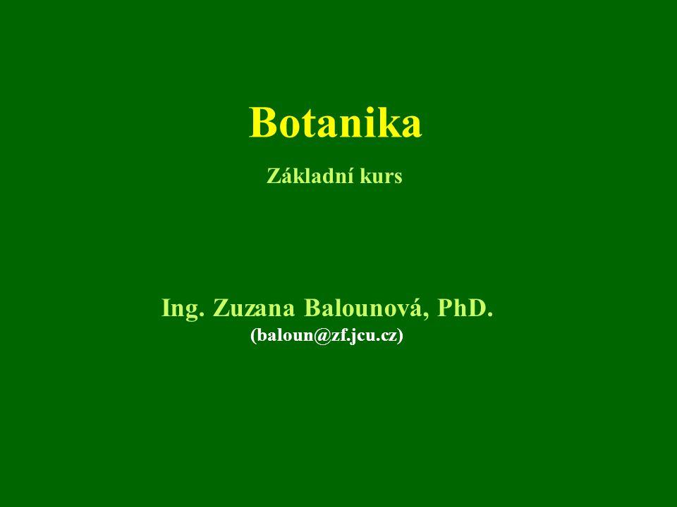 Ing. Zuzana Balounová, PhD.