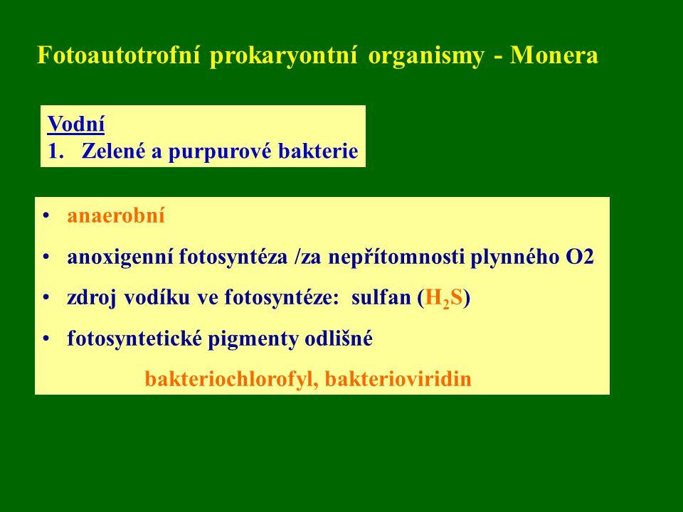 Fotoautotrofní prokaryontní organismy - Monera