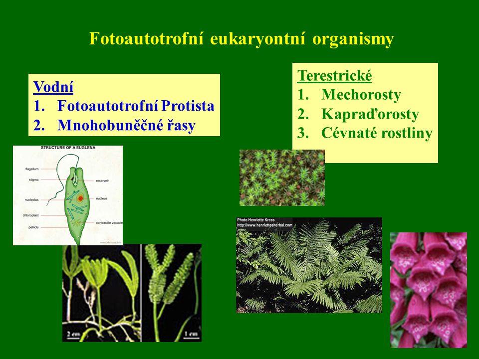 Fotoautotrofní eukaryontní organismy